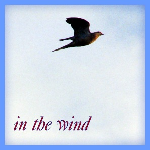 on the wind logo