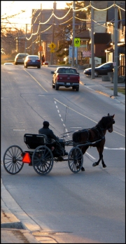 A Mennonite horse and buggy crosses the road