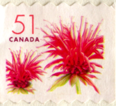 cancelled Canada Post 51 cent stamp with 2 red flowers